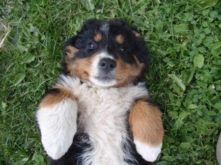 Ecco Superotto, il cane di Patuasia.