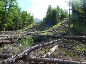 Tanto di alberi ne abbiamo.