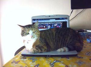 Questa è Penelope! Mandate le foto dei vostri gatti insieme a patuasia, sarà divertente pubblicarle.