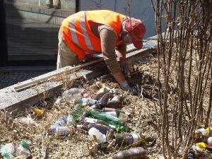 La siepe di bosso è morta a causa di un impianto di irrigazione sempres tato difettoso. lascia in eredità decine di lattine e bottiglie testimoni della movida aostana. Evviva Aosta capitale dell'Ambiente!
