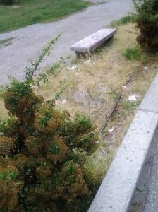 Giardini pubblici ad Aosta!