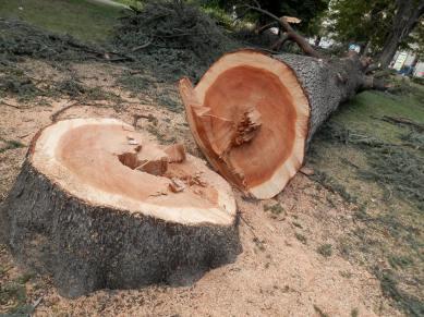 Vi sembra un albero malato?